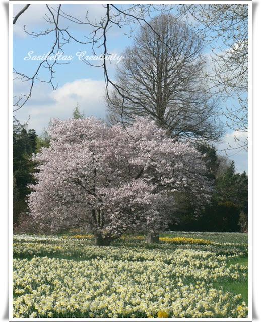 Arboretum 64