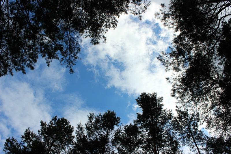 Im Wald 36