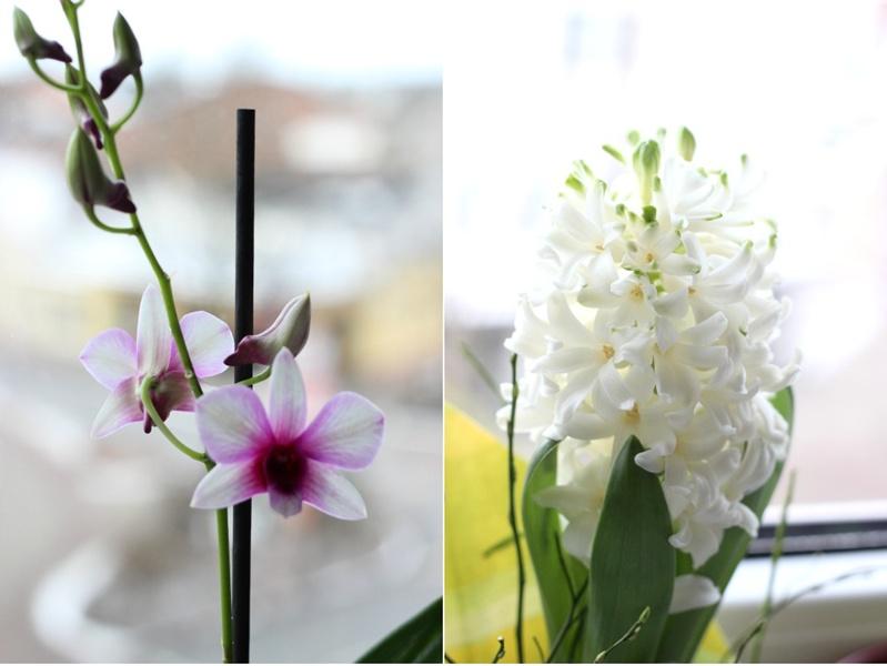 Blumengruß 23