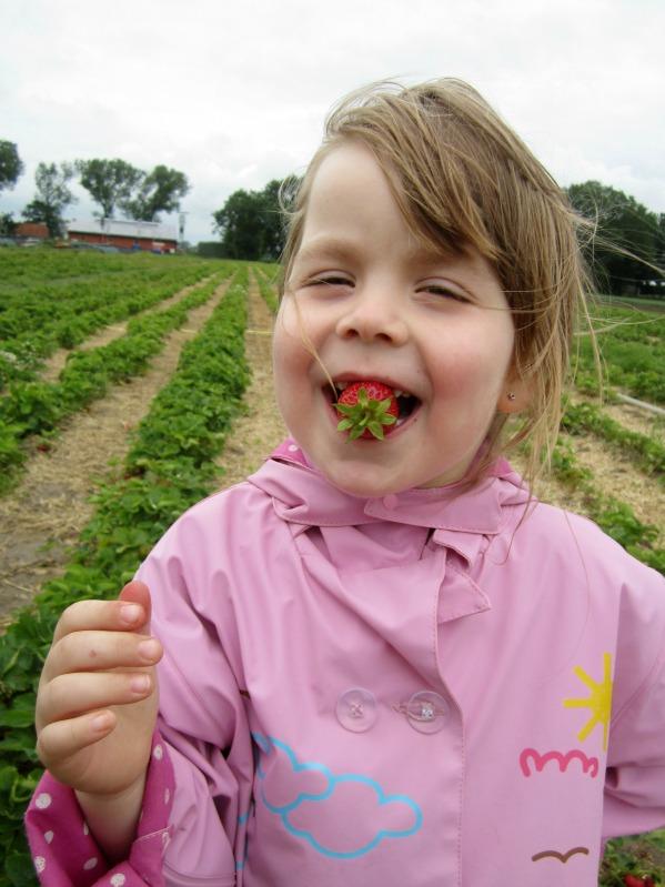 Erdbeerwoche Tag 2 - Erdbeersuppe und Erdbeer-Ricotta Popsicles 15